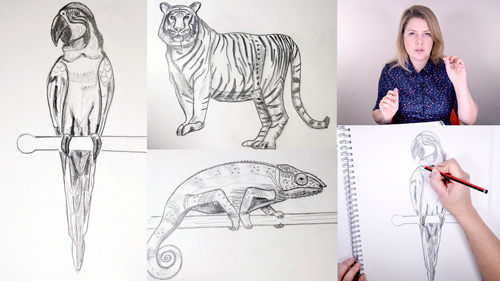 How to Draw Rainforest Animals