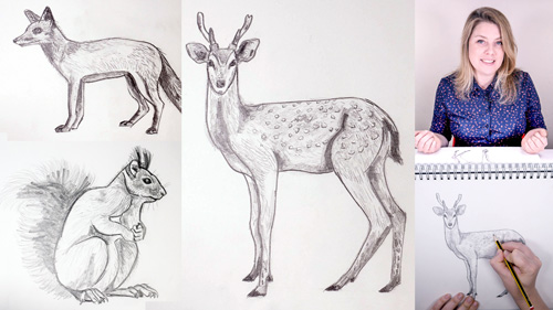 How_to_Draw_Woodland_Animals